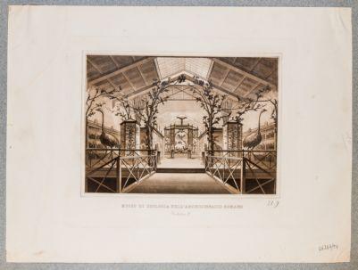 Palazzo della Sapienza o Archiginnasio Romano. Museo di Zoologia