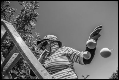 Farm workers at a nursery for apple seedlings