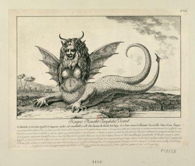 Harpie Monstre Amphibie Vivant Ce Monstre a environ 12 pieds de longueur, sa face est semblable à celle d'un homme... : [estampe]