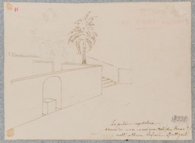 Campidoglio, la Palma capitolina