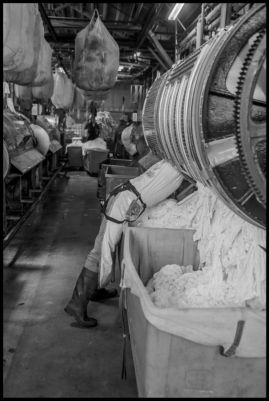 A laundry worker loads tablecloths from a hotel into an industrial washer at California Linen Service